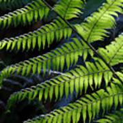 Rainforest Wonder Poster