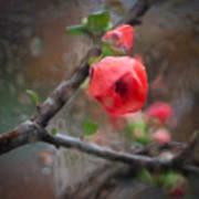 Raining Day Blossom  Poster