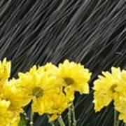 Raining On Yellow Daisies Poster