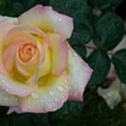 Rainy Day Rose Poster