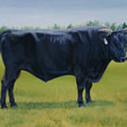 Ralphs Bull Poster by Stacey Neumiller