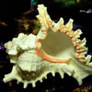 Rams Horn Seashell Poster