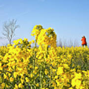 Rape Field With Photographer Poster