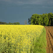 Rapeseed Field With Storm Clouds In Background Poster