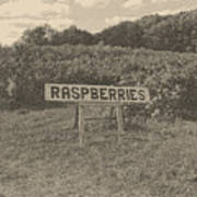 Raspberry Fields  Poster