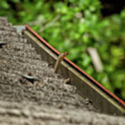 Rat Snake Poster