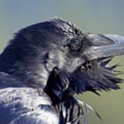 A Raven - Windblown Poster
