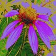 Recolored Echinacea Flower Poster