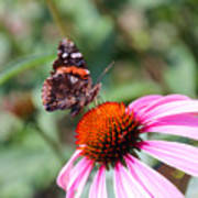 Red Admiral 1543 Poster