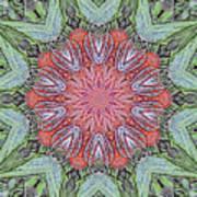 Red Amaryllis Trio Kaleidoscope Poster