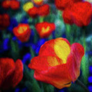 Red And Orange Tulips Poster