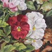 Red and White Pansies Poster