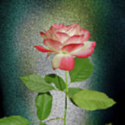 Red And White Rose5 Cutout Poster