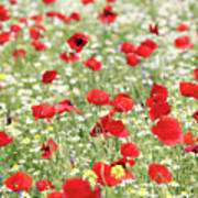 Red And White Wild Flowers Spring Scene Poster