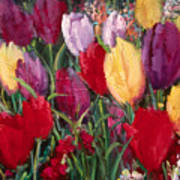 Red And Yellow Tulips Poster