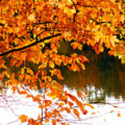 Red Autumn Leaves 2 Poster