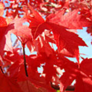 Red Autumn Leaves Art Prints Canvas Fall Leaves Baslee Troutman Poster