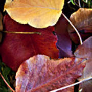 Red Autumn Leaves Poster