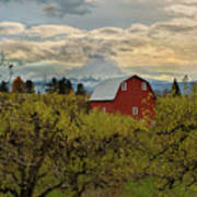 Red Barn At Pear Orchard Poster