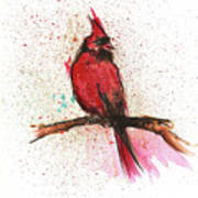 Red Bird Poster