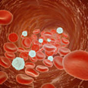 Red Blood Cell Flow Inside The Artery Poster by Stocktrek Images