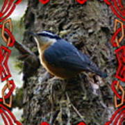 Red Breasted Nuthatch 2 Poster