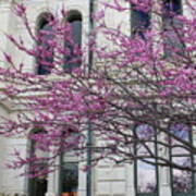 Red Buds And San Antonio City Hall Poster