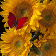 Red Butterfly With Four Sunflowers Poster