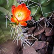 Red Claretcup Cactus Poster