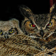 Red Eyed Mama And Baby Horned Owls Poster