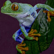 Red Eyed Tree Frog Original Oil Painting 4x6in Poster