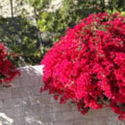 Red Flower Bushes Poster