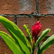 Red Flower Iv Poster
