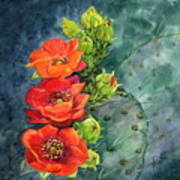 Red Flowering Prickly Pear Cactus Poster