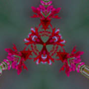 Red Flowers Abstract Poster