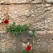 Red Flowers In Ruins Poster