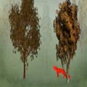 Red Fox Forest Poster