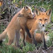 Red Fox Mama's Love Bite Poster