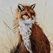 Red Fox Waiting On Breakfast Poster