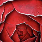 Red Frosty Metal Rose Poster