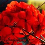 Red Geranium Anniversary Greeting Poster