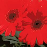Red Gerberas Poster