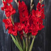 Red Gladiolus In Striped Vase Poster