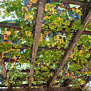 Red Grapes Hanging From A Trellis Napa Valley California Poster by George Oze
