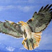 Red Hawk, 11x14, Oil, '07 Poster