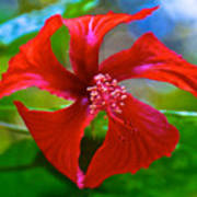 Red Hyacinth In Bourbon Resort Gardens Near Iguazu Falls National Park-brazil  Poster