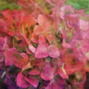 Red Hydrangea 2421 Idp_2 Poster