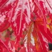 Red Leaf Abstract Poster