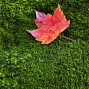 Red Leaf Green Moss Poster