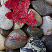 Red Leaf Wet Stones Poster by Garry Gay